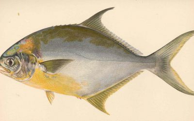 Pompano In Parchment Paper: An American Classic