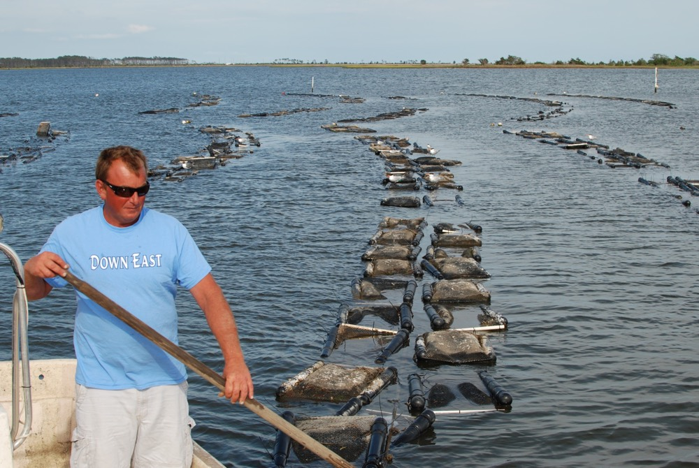 Adam's oyster farm in Jarrett Bay