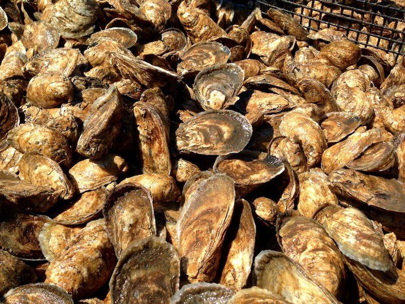 Chadwick Creek Oysters
