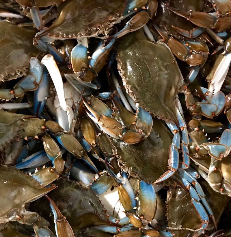 Hard Blue Crabs
