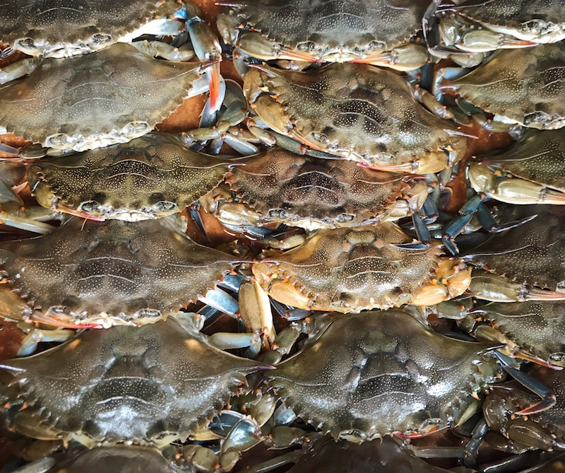 North Carolina soft shell crabs