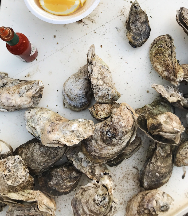 Lawton Point Oysters steamed