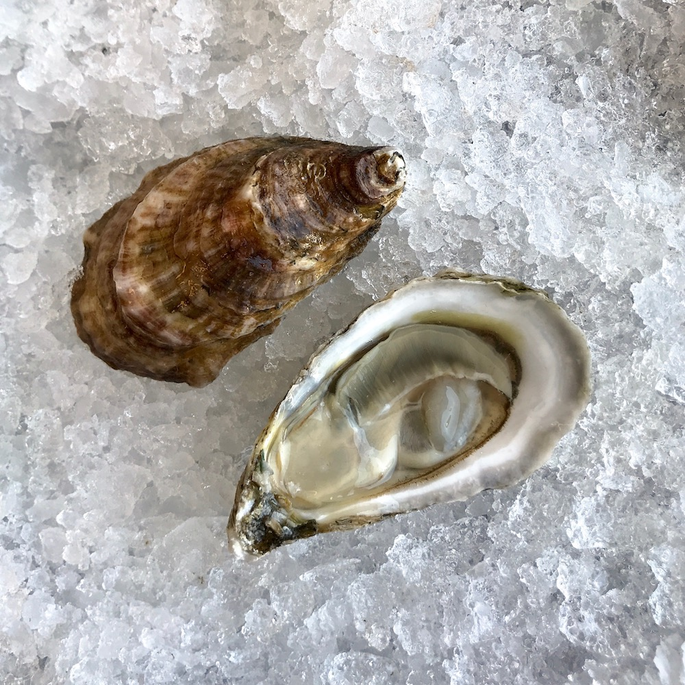 Devil Shoal oyster grown near Ocracoke, North Carolina by grower Fletcher O'Neal. Devil Shoal, along with other North Carolina varieties, will be regularly featured on the oyster bar menu.