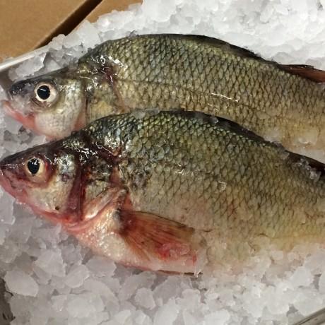 Deep Fried Perch Fish Recipes