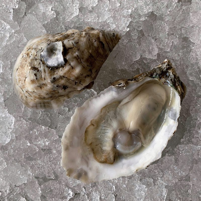 Bell's Reef oyster