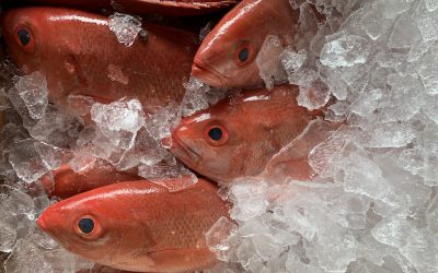 The benefits of buying local seafood